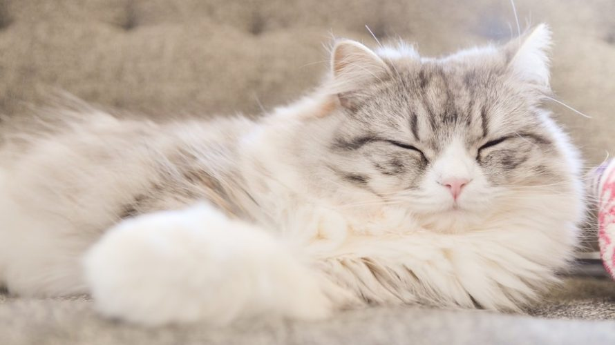 睡眠の次に疲労が回復する方法はこれです